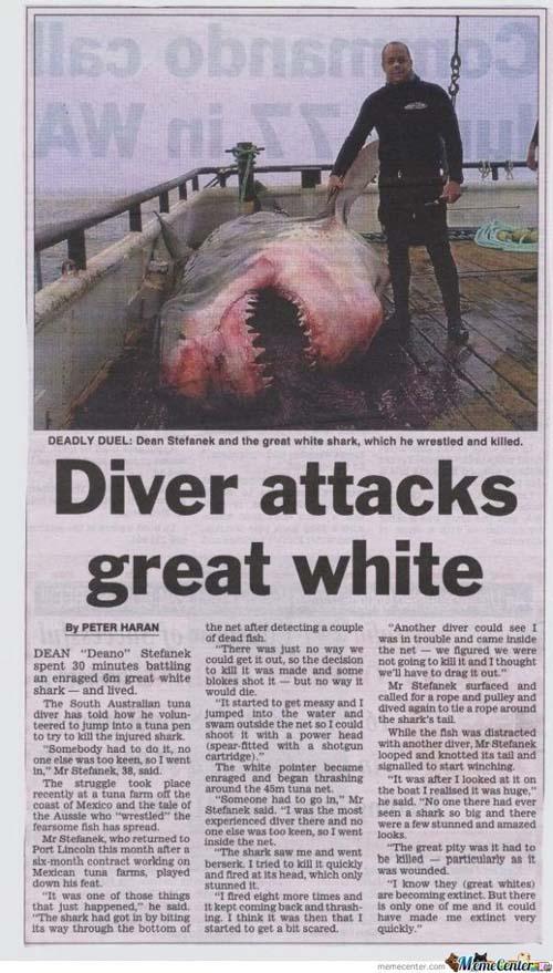 """Un plongeur attaque un grand requin blanc"""