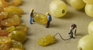 Minimiam : de la vie miniature sur notre nourriture !