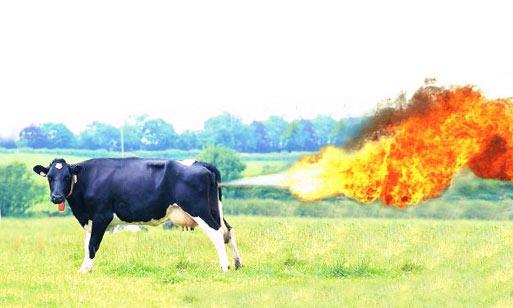 Une accumulation de pets de vaches fait exploser une ferme