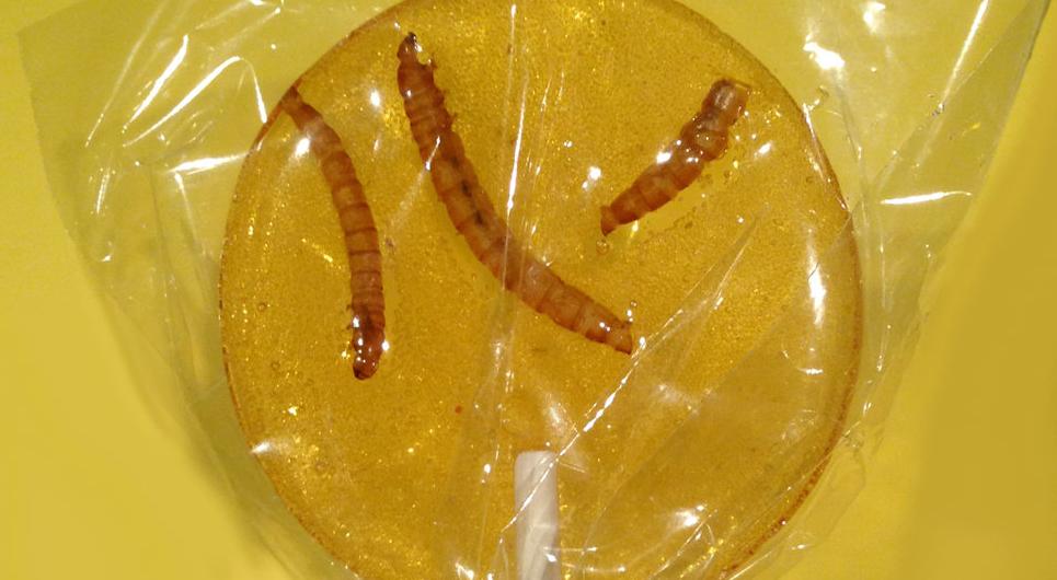 Wtf les bonbons aux insectes - Barriere aux insectes ...