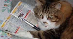 Les gens préférant les chats aux chiens seraient plus intelligents