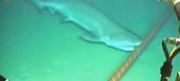 [Vidéo] Internet attaqué par les requins
