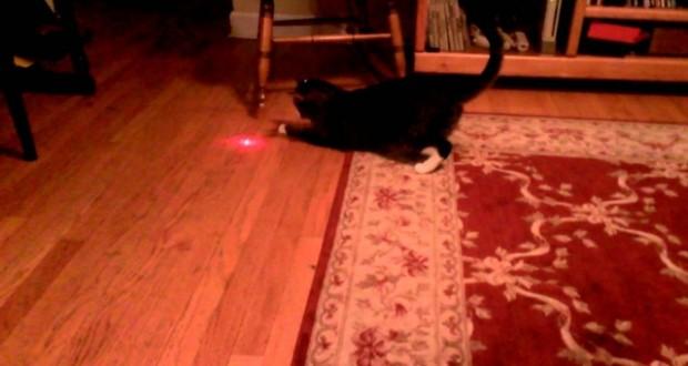 [Vidéo] Comment occuper un chat pendant des heures...