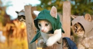 [Vidéo] Assassin's Creed Unity avec des chatons
