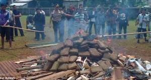 La police brûle 3 tonnes de cannabis et drogue toute une ville